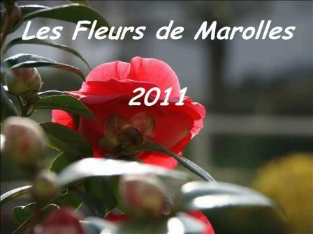 fleurs_2011