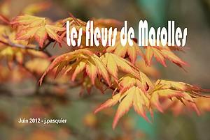 Les Fleurs de Marolles 2012