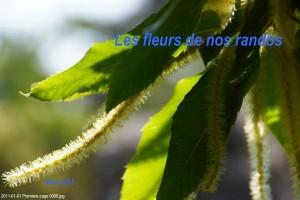 Les fleurs de nos randos