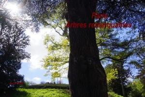 2016-04-10 Paris - Arbres remarquables