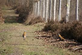 2012-03-27 les vaux de cernay 0059