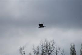 2012-04-19 Vert le Petit 0024